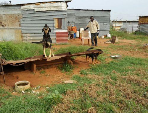 Refilwe township 2017/01